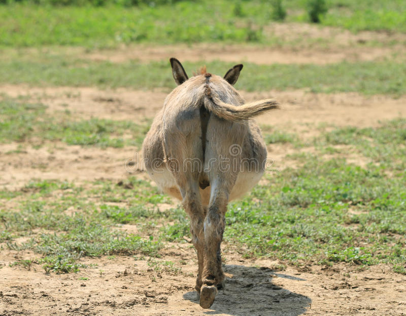 donkey-butt-strait-humorous-tail-end-behind-ass-green-pasture-42748130.jpg